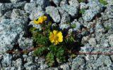 Parco Nazionale dello Stelvio: un patrimonio da tutelare con un piano strategico