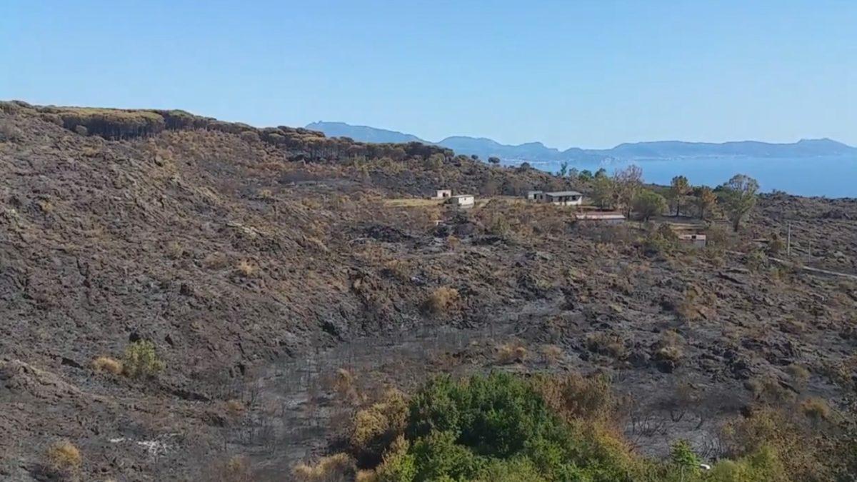 Per la riforestazione dopo gli incendi