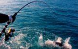 Pesca commerciale: al via le nuove norme europee per la conservazione degli ecosistemi marini