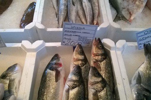 Pesca: occhio ai falsi