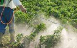 Pesticidi: una tossicodipendenza che costa cara all'ambiente