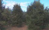 Nuovo piano di forestazione della Campania