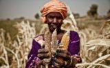 Piccoli agricoltori e mercato globale