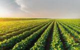 Pil: il clima impazzito ha danneggiato l'agricoltura italiana