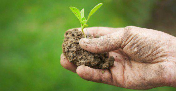 Poca pubblicità all'agricoltura biologica
