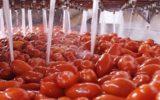 Pomodoro: al via la campagna di trasformazione 2017