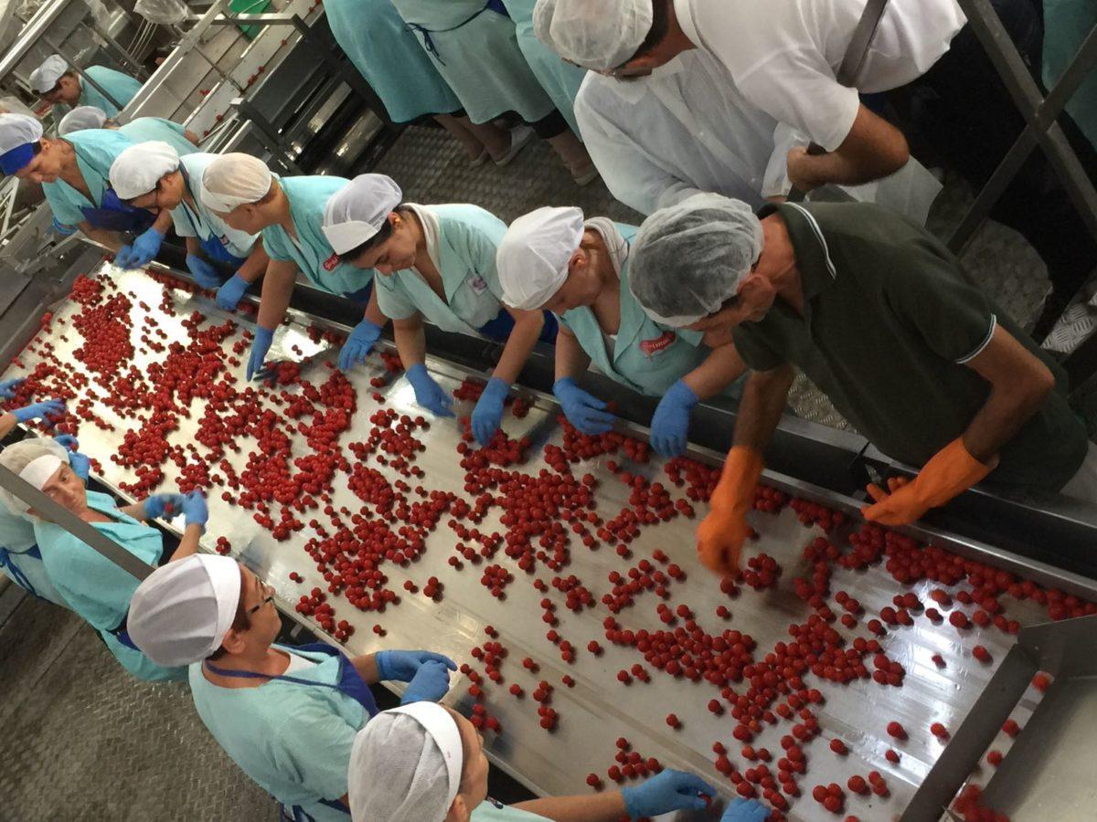 Pomodoro: al via la campagna di trasformazione 2018