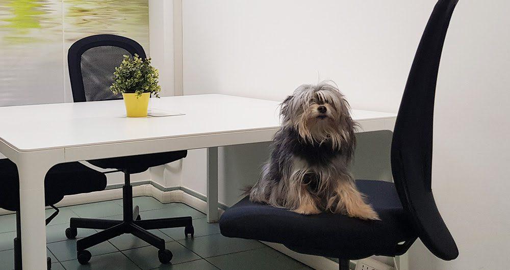 Portare il cane in ufficio: un trend in ascesa che apporta molti benefici
