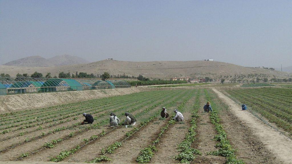 Pratiche sleali in agricoltura: lo stop di Coldiretti