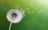 Primavera ed allergie