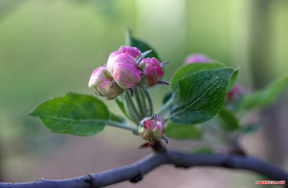 Primavera in anticipo: l'Italia in fiore