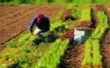 PSR FEASR Lazio: il bando per promuovere la filiera alimentare