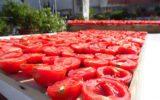 Regione Campania: bandi agricoltura