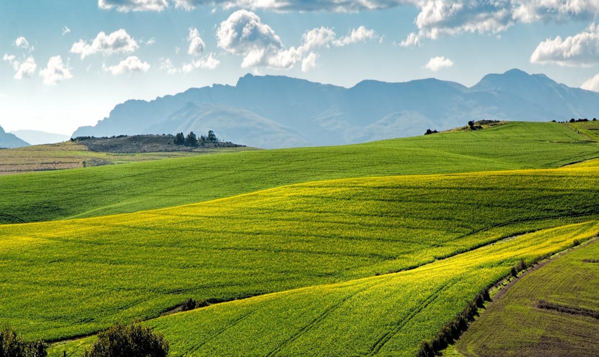 Regione Campania: arriva il sistema Blockchain per l'agroalimentare