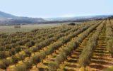 Ricerca e innovazione in agricoltura: il nuovo corso universitario