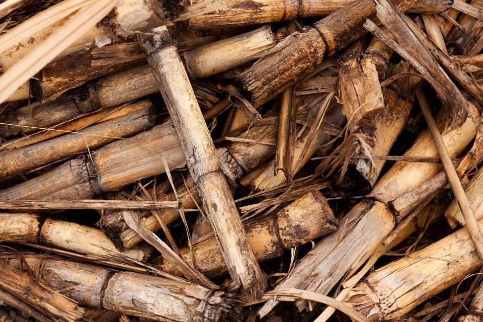 Rintracciabilità delle biomasse per la produzione di energia elettrica