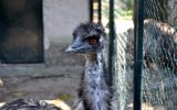 Scuola allo Zoo di Napoli