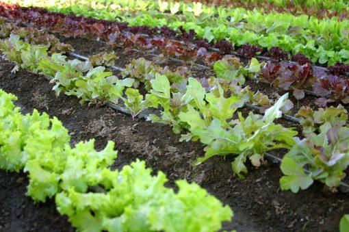 Si riduce la superficie agricola utilizzabile