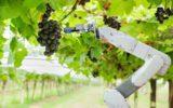 Smart farming & food