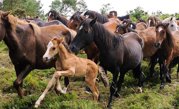 Spagna: uccide il cavallo e viene condannato