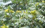 Specie vegetali aliene invasive: impatto e gestione