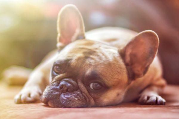 Stress da rientro? Ne soffrono anche i cani