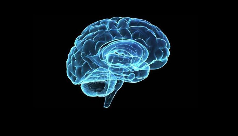 Switch Brain