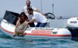 Tartaruga ricongiunta al suo mare grazie a Legambiente e Mareblu