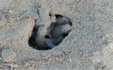 Tartarughe marine nascono dalla spiaggia della Gianella
