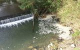 Teramo: il WWF denuncia il grave inquinamento dei corsi d'acqua