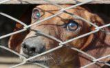 Traffico di animali: un giro d'affari milionario
