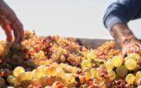 Turismo rurale e sostenibile in camper: arriva in Italia Agricamper Italia