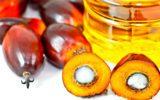 Tutta la verità sull'impatto ambientale dell'olio di palma