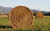 Un'agricoltura a basso impatto ambientale