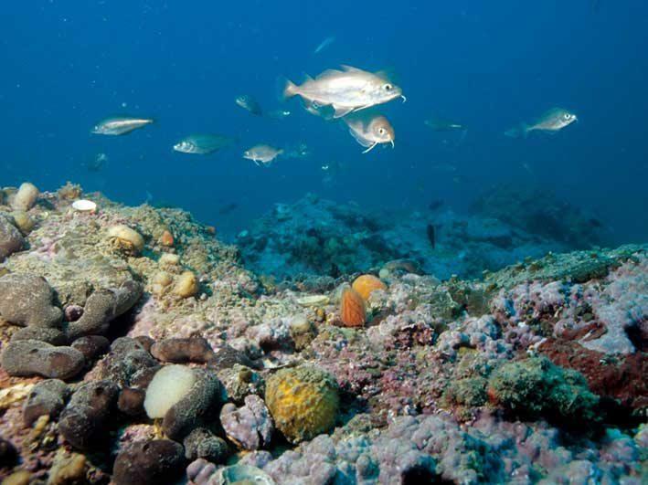 Un drone subacqueo alla scoperta dei fondali adriatici