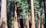 Un mappa interattiva sulla sostenibilità delle foreste