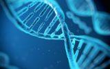 Un nuovo approccio alla terapia genica per le malattie 'genomiche'