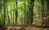 Un piano strategico delle Nazioni Unite per le foreste