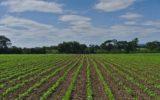 Una giornata di studi su agricoltura e tutela ambientale