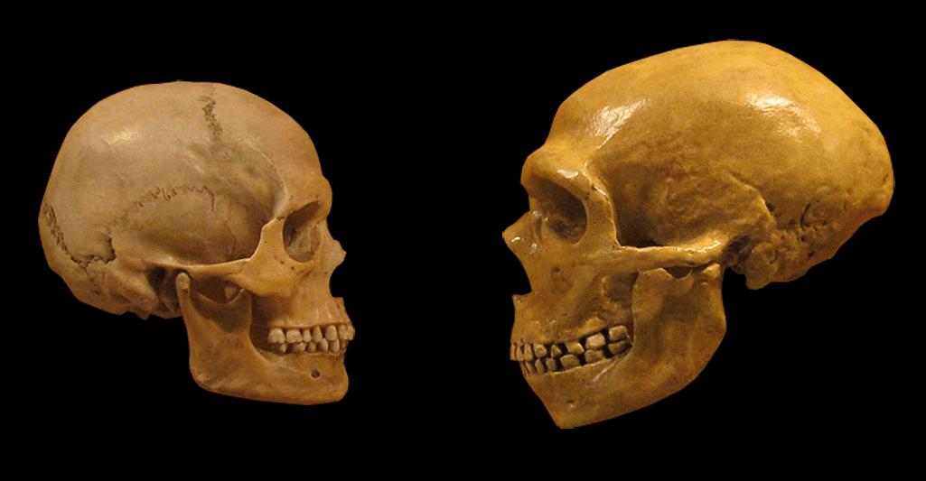 Uomo di Neanderthal: scoperte le cause della sua estinzione