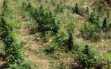 USA: raddoppiato in dieci anni il consumo di cannabis