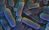 Usare i batteri per rilevare cancro e diabete