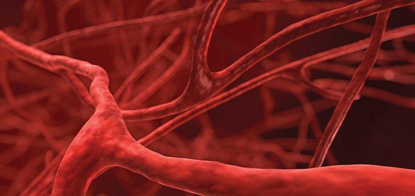 Vasi sanguigni umani creati in laboratorio
