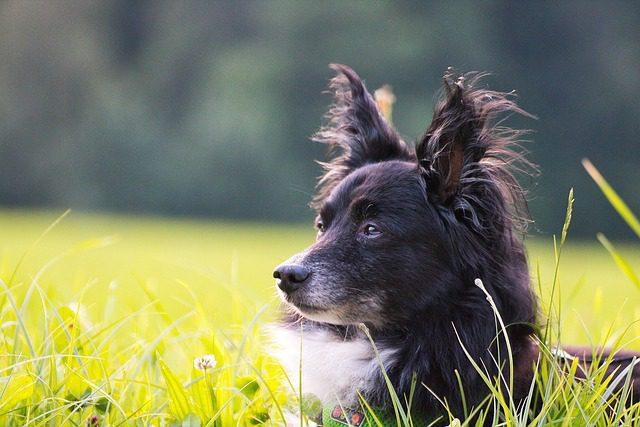 Vivere con un Pet: una scelta di responsabilità