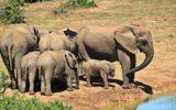 WWF: Elefanti