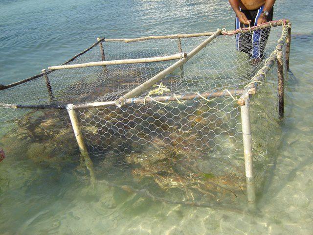 WWF: Nuovo Report sulla pesca