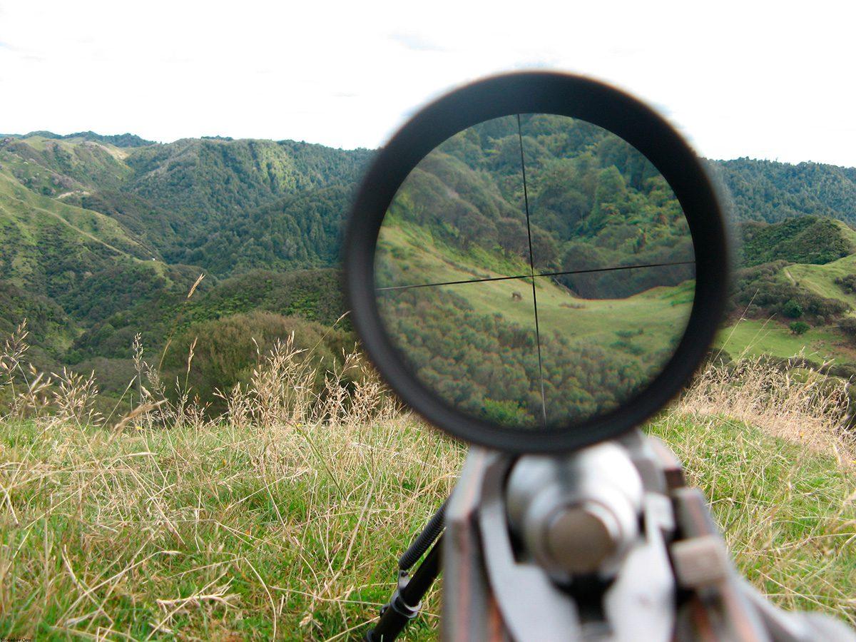 """WWF: proteggere le specie """"a rischio"""" dalla caccia"""