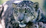 WWF: Storie di ordinaria conservazione in Nepal