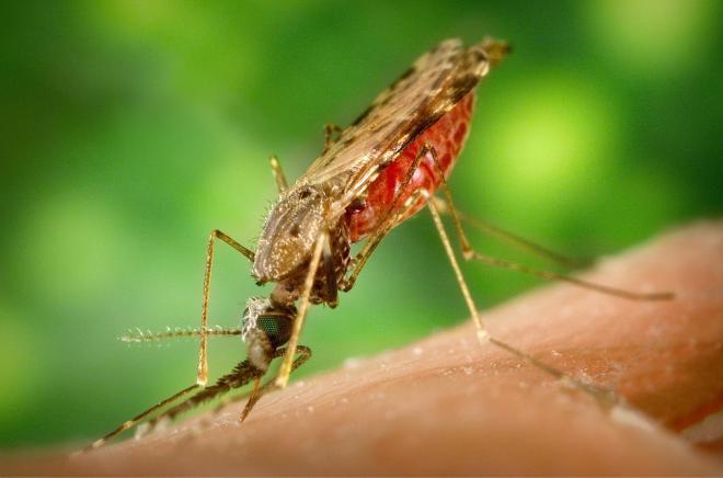 Zika: l'Agenzia europea dei medicinali istituisce un gruppo di esperti