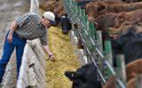 Zootecnia segnale positivo dal Consiglio Ue